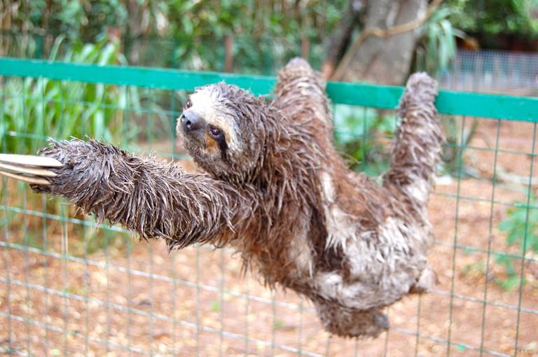 Sloth | © Manuel Menal/Flickr