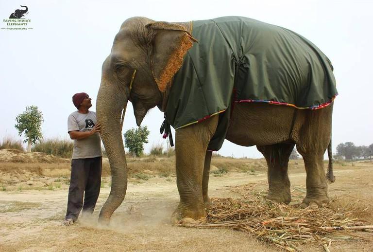 Asha and her elephant keeper © Wildlife SOS