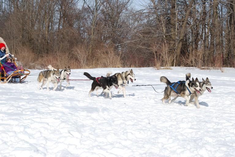 Dog Sledding © C Slack / Flickr