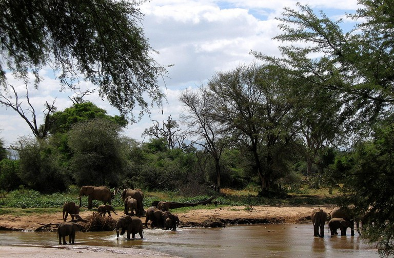 Elephants bathing at Ewaso Nyiro river in Samburu National Reserve | © Franco Pecchio / Flickr
