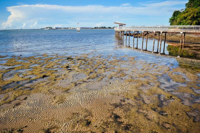 Intertidal boardwalk at Chek Jawa, Singapore