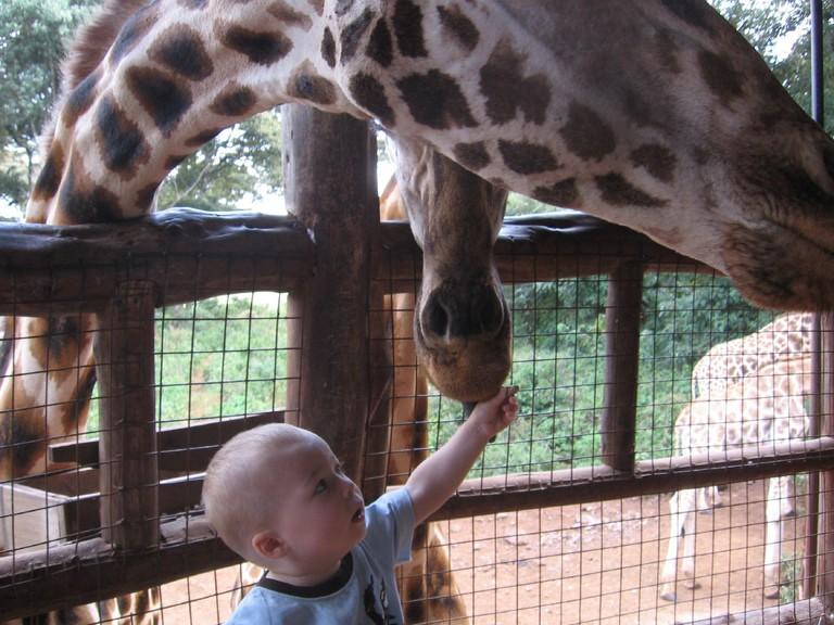 Feeding a giraffe | © Valentina Buj / Flickr