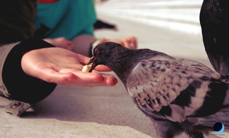 Illegal pigeon feeding in Paris │© Raban_Holzner / Flickr