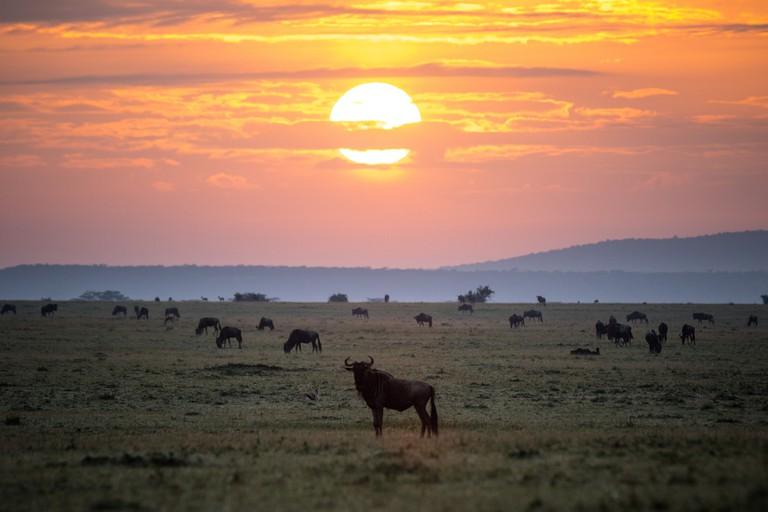 Maasai Mara National Reserve | © Make It Kenya / Flickr
