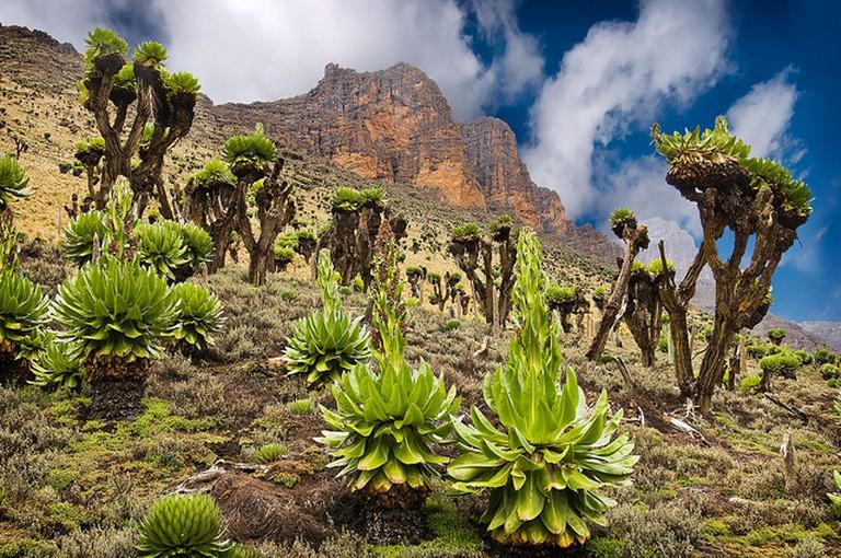 Mt Kenya vegetation | © Ignacio Palacios / Flickr