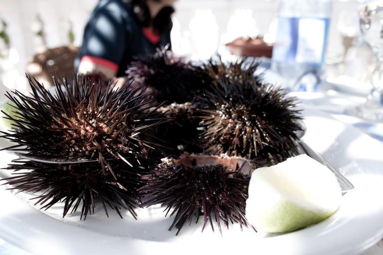 Sea urchins │© Jeremy SALMON