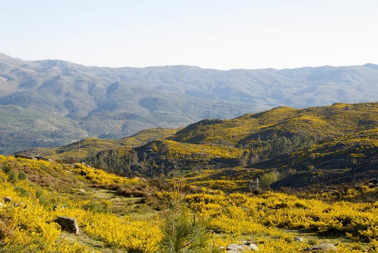 Amarelo predominante, Serra Amarela, Peneda-Gerês National Park | © JotaCartas