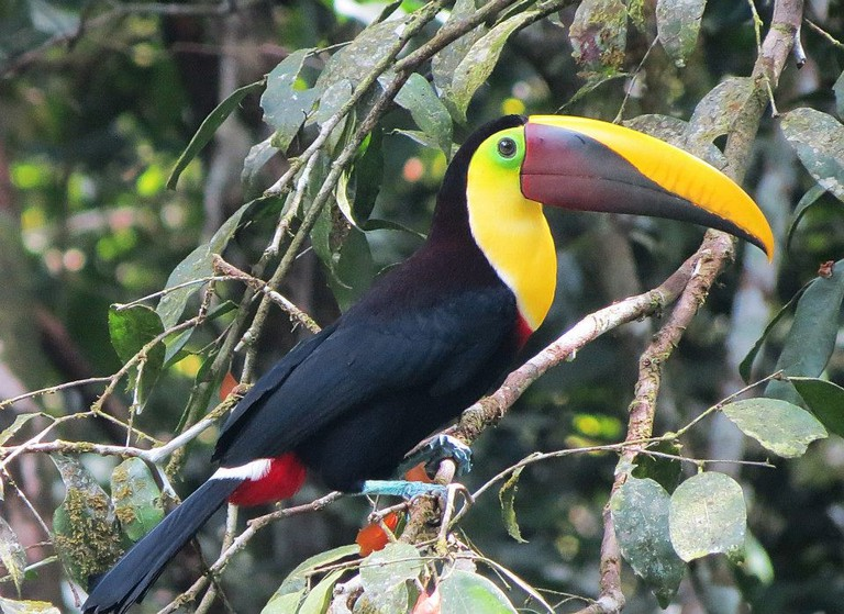 Toucan/Frontier Official/Flickr