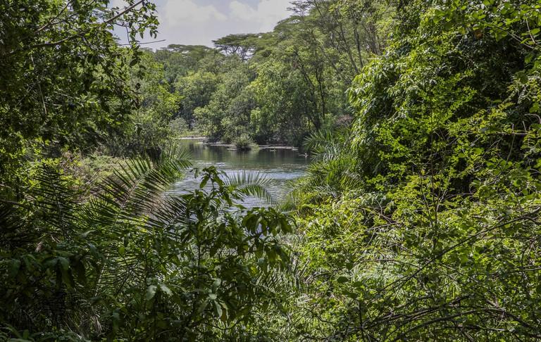 Mzima Springs, Tsavo West National Park | © Ninara / Flickr