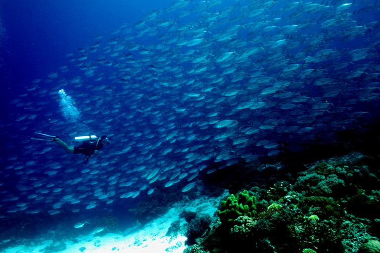 Shark Airport at Tubbataha Reefs | © Q Phia / Flickr