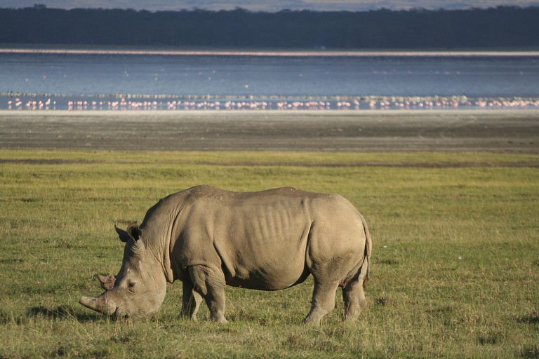 White rhino at Nauku National Park | © Rob & Dani / Flickr