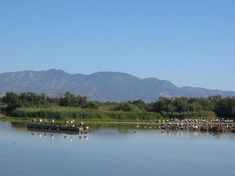 Parc Natural dels Aiguamolls de l'Empordà | ©Gordito1869 / Wikimedia Commons