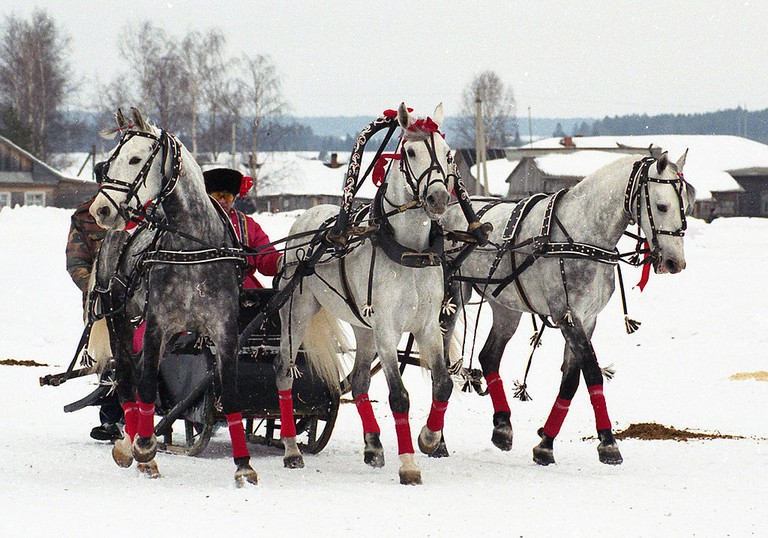 Troika of Moscow stud performing at Vologda racecourse |© By Лена/Wikimedia Commons