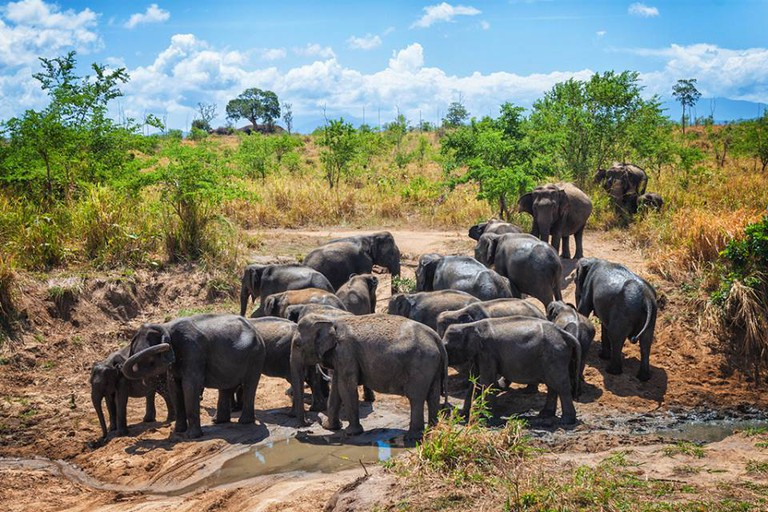 Udawalawe National Park | © Jayaruwan Gunathilake