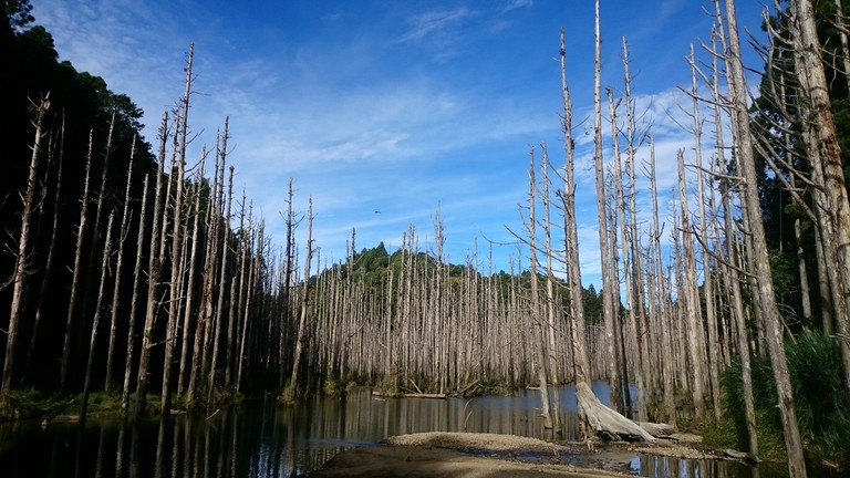Shuiyang Forest | © Joe Lo / Flickr