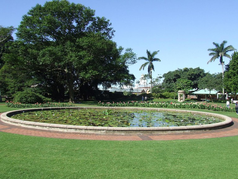 The Lilypond at Durban's Botanic Gardens