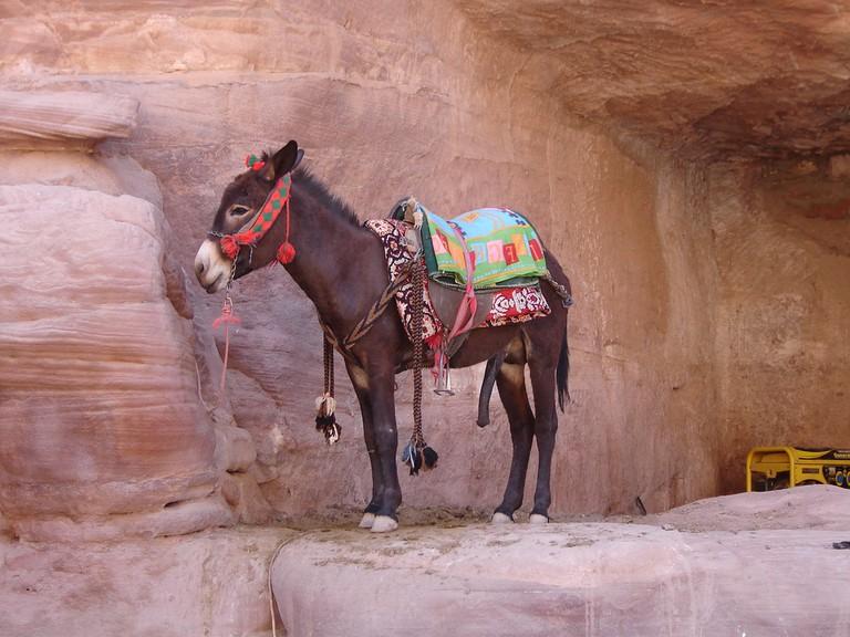 Petra - © Andrew Kippen