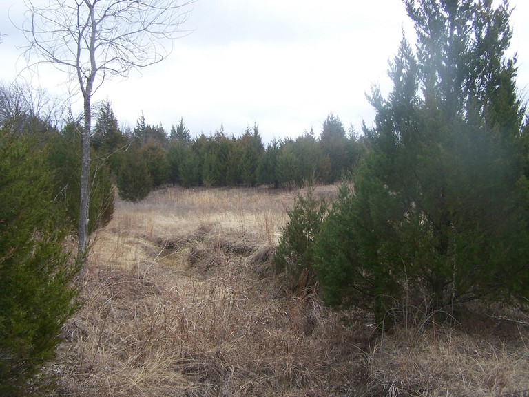 Cedar field in Collin County © Robert Nunnally