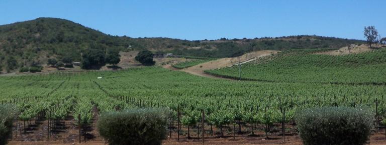 A vineyard in Baja California, Mexico | © Gabriel Flores Romero/Flickr