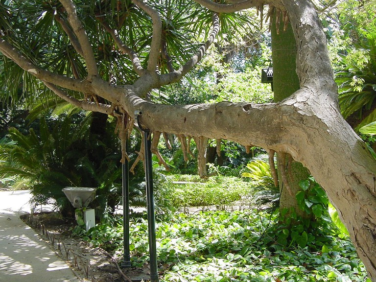 Malaga´s botanical gardens are home to over 300 species from 5 continents; Olga Berrios, flickr