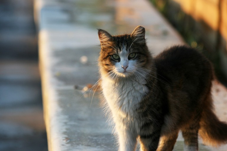Istanbul Cat | © Quinn Dombrowski/Flickr