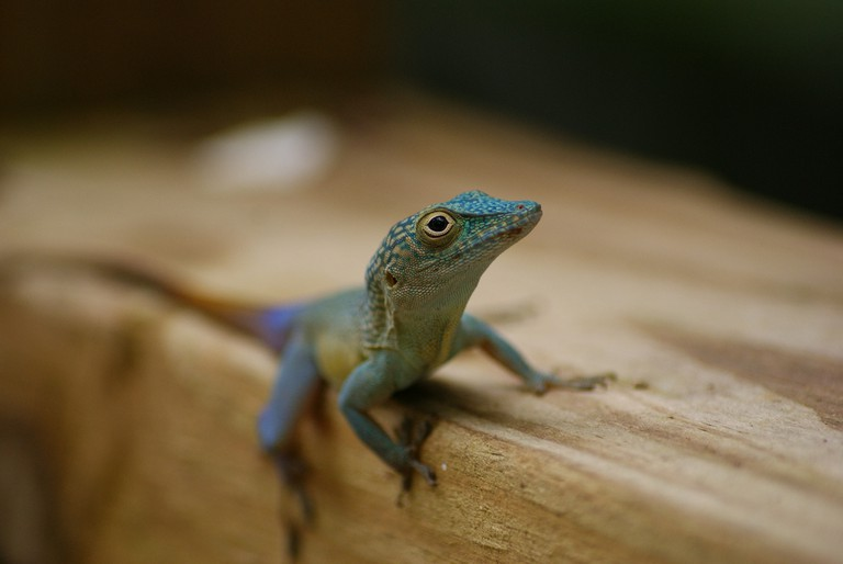 Lizard | © Jannes Pockele/Flickr