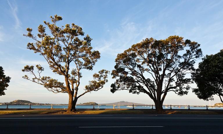 Tamaki Drive | © russellstreet/Flickr