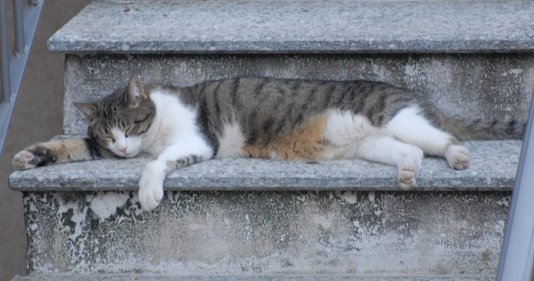 Even cats love to nap in Madrid | © Luigi Rosa/Fllickr