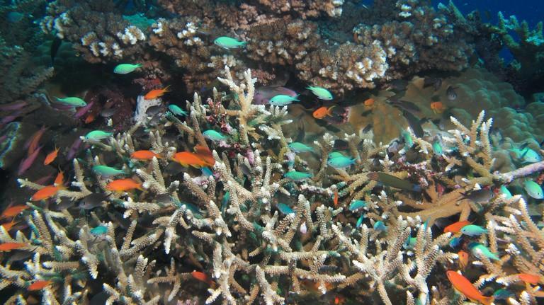 Fiji Diving   © Ed Bierman / Flickr