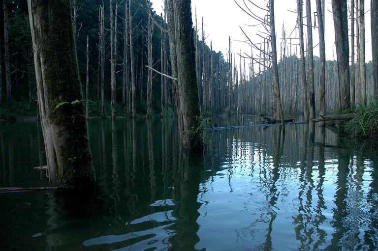 Shuiyang Forest | © 彥彬 / Flickr