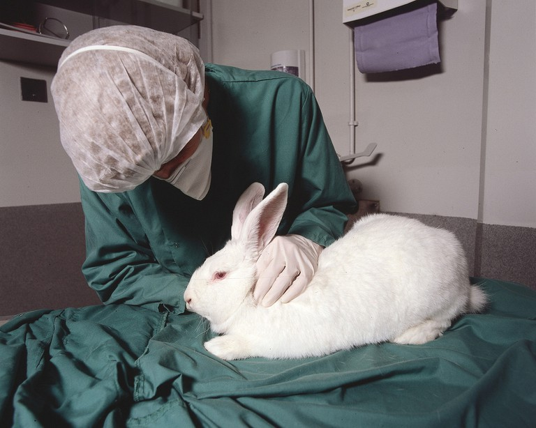 Rabbits and mice are often used for cosmetics testing. | © Understanding Animal Research/Flickr