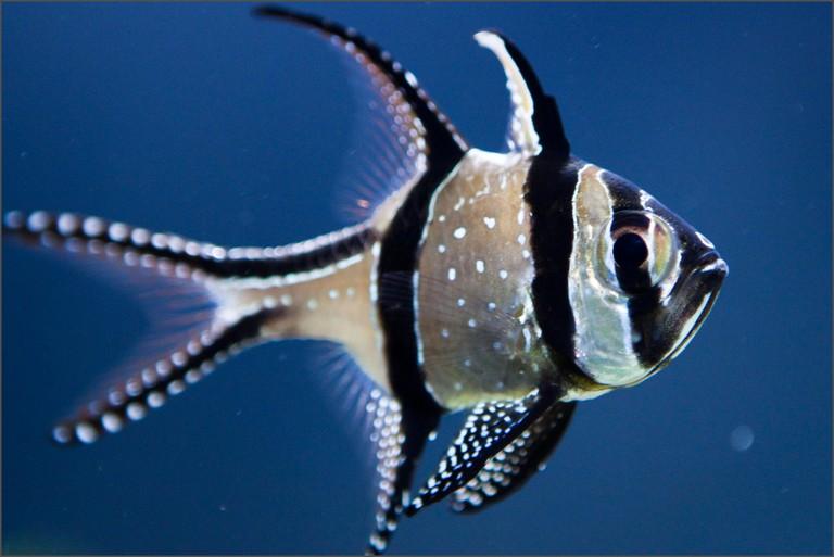 Fish at Tennessee Aquarium | (c) ravas51 / Flickr
