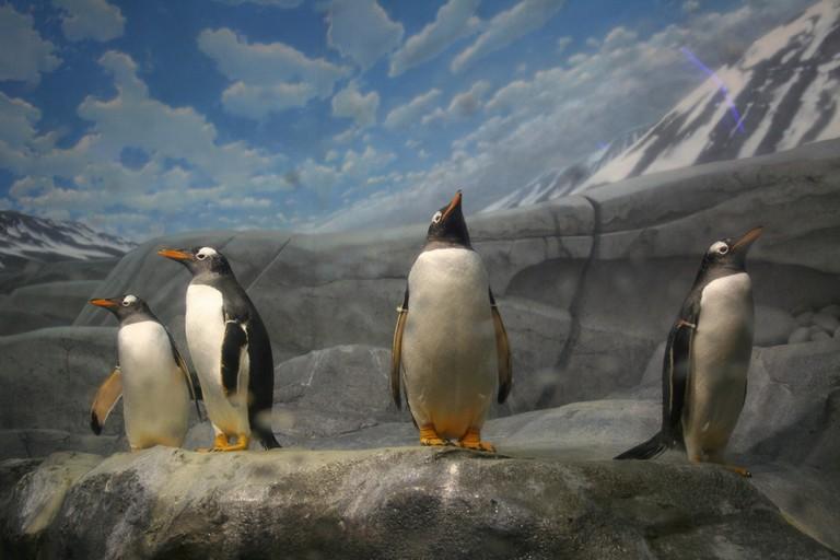 "Penguin Sentries | (c) Jeremiah ""GrayBeard"" Richards / Flickr"