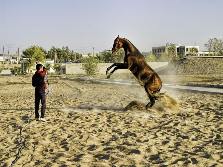 Chinese horse 1