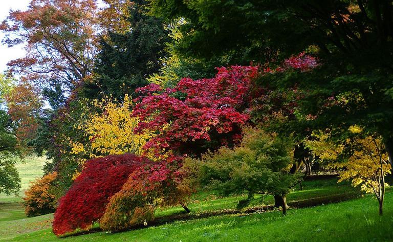Autumn at Dartington © Herbythyme / Wikimedia