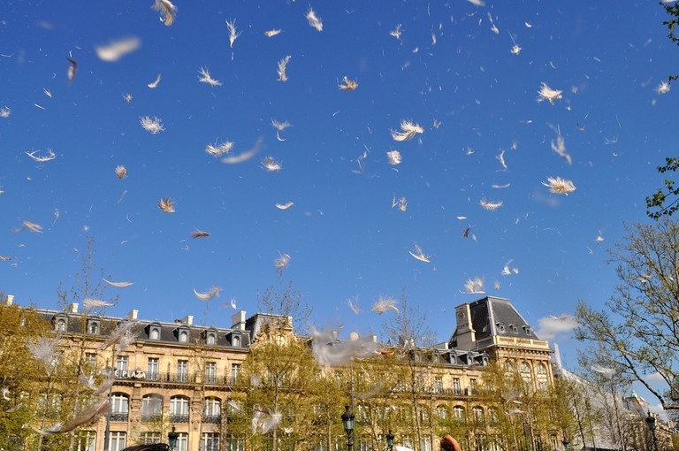 Feathers flying in Place de la République │© Frederic Potet / Flickr