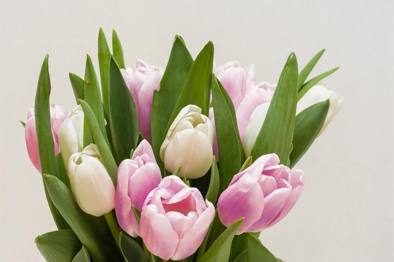 Tulips | © anestiev/pixabay
