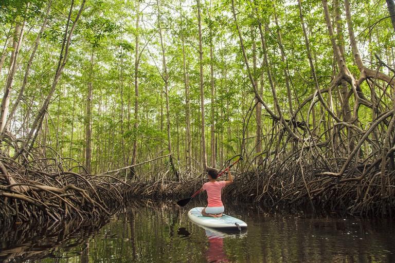 Mangrove paddle boarding | © James Anderson/Tartan Group