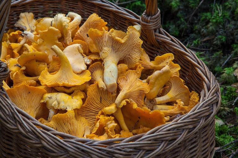 Mushroom picking Barfroforsberg via PIxabay