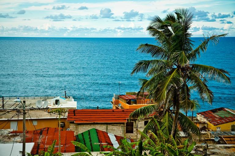 Palm tree in La Perla   © Breezy Baldwin/ Flickr