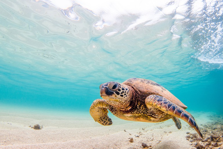 The clear waters of Playa Tortugas | © Shane Myers Photography/Shutterstock