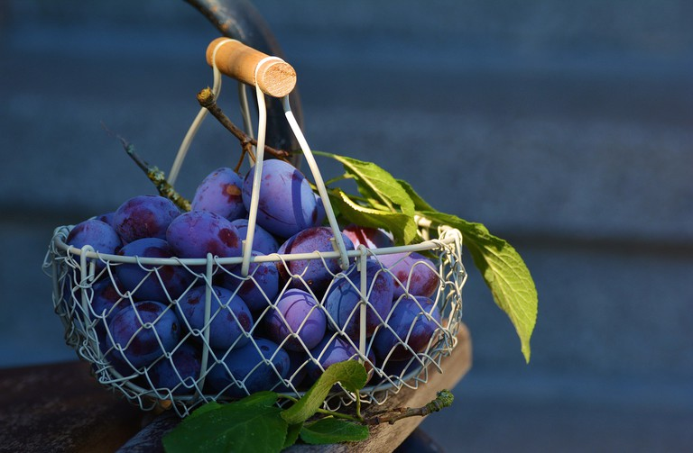 Plums are one of the major rakia ingredients