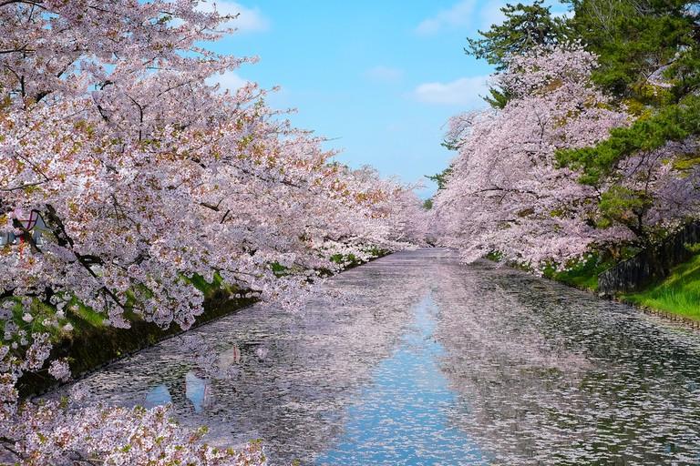 Hirosaki Castle Park | © Satit Soithongcharoen / Shutterstock