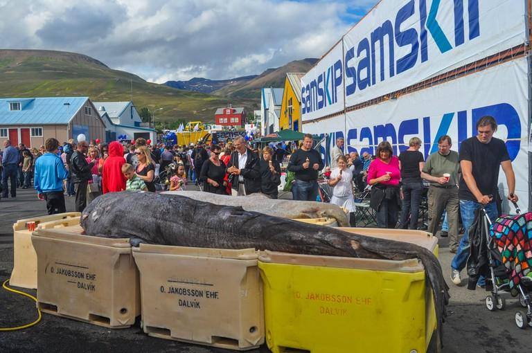 Shark on Great Fish Day, Iceland | © Gestur Gislason/Shutterstock