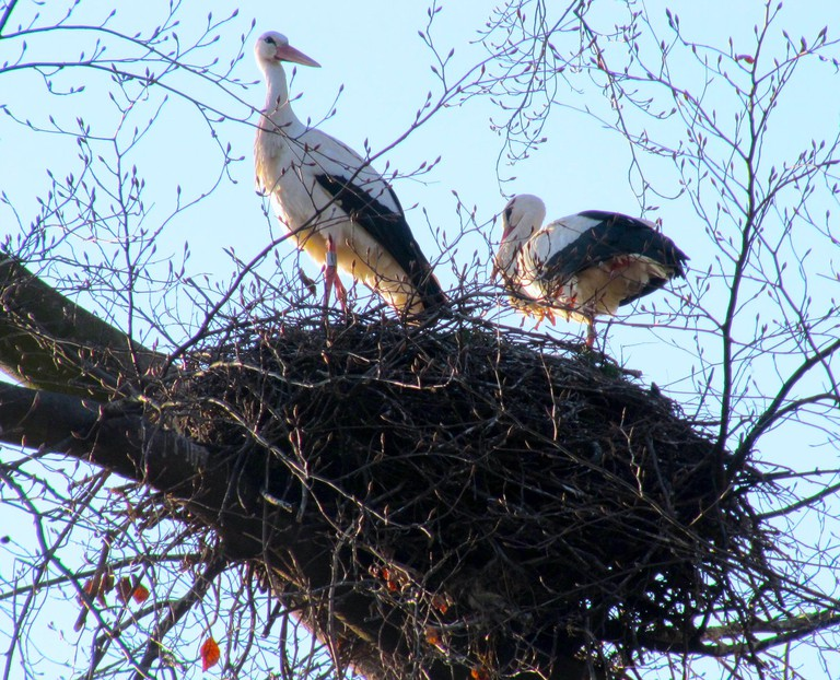 Storks in the Parc de l'Orangerie ©François Schnell/Flickr