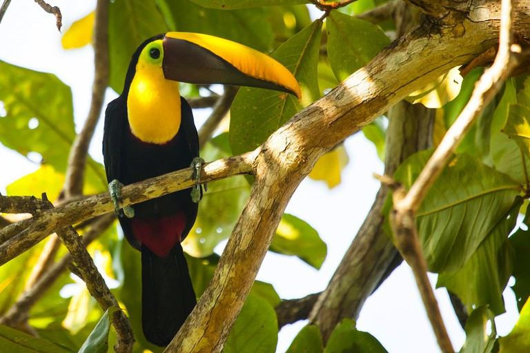 Toucans come in all different color combinations | © James Anderson/Tartan Group