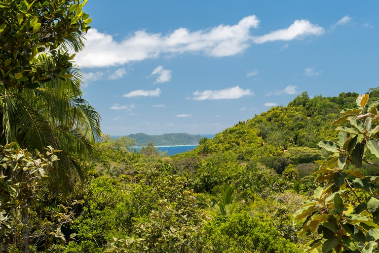 The lookout at the Vallee De Mai |©So Seychelles/flickr