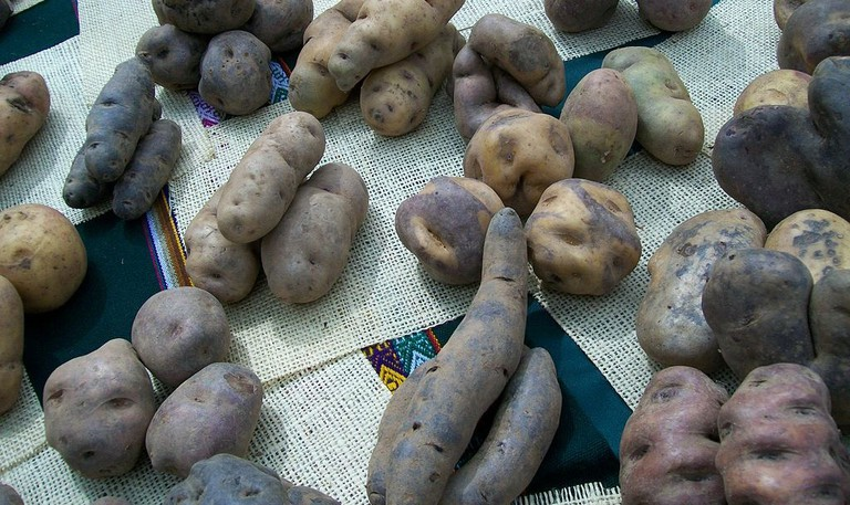 Native Peruvian potatoes|©Edgar Amador Espinoza/Wikipedia