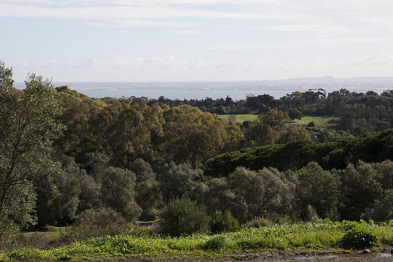 Monsanto Forest Park © Manuelvbotelho / Wikimedia Commons