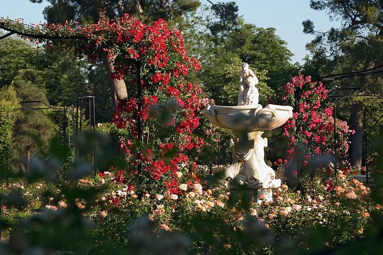 """<a href=""""https://commons.wikimedia.org/wiki/File:Rosaleda_del_Retiro_(Madrid)_02.jpg?uselang=en-gb"""">The rose gardens in the Retiro   © Felipe Gabaldón/WikiCommons</a>"""